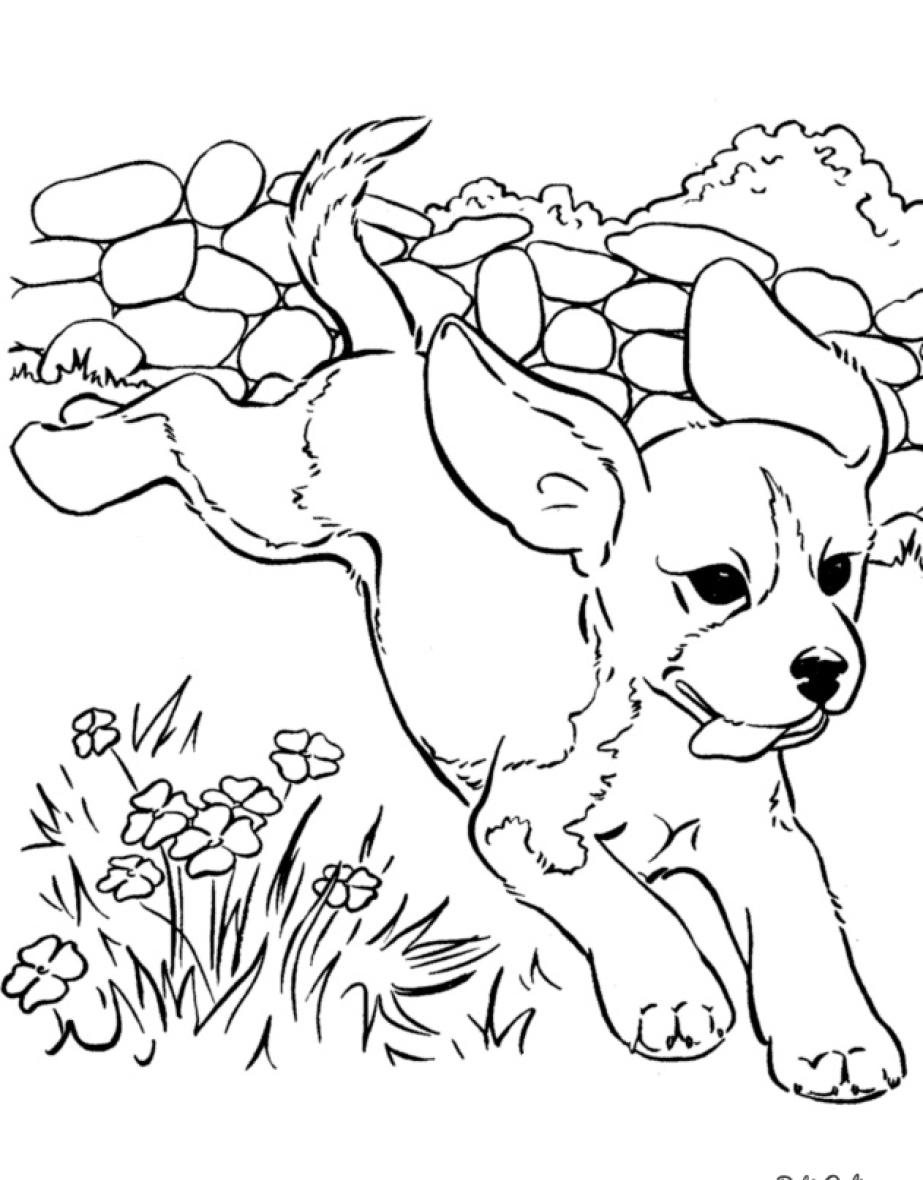 распечатать онлайн раскраску собака убегает от обидчика