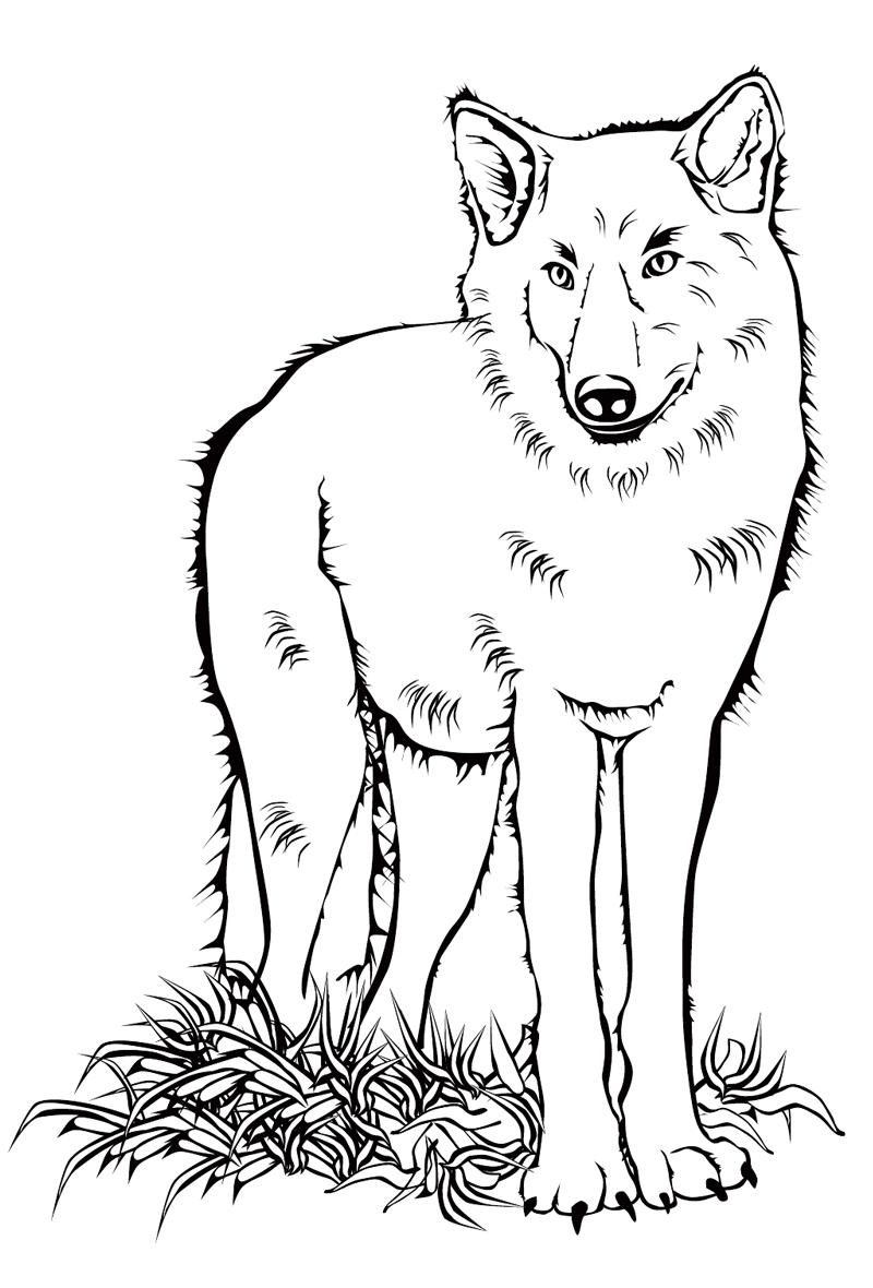 Раскраска волка для детей